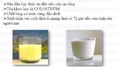 Sữa non - tăng miễn dịch, nâng cao sức đề kháng