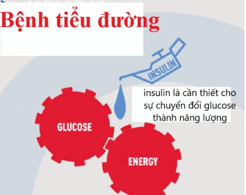 Insulin rất quan trọng với bệnh tiểu đường