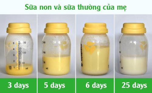 Sự khác biệt giữa sữa non và sữa thường